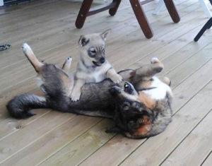 Klara och Qia leker