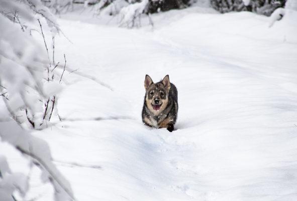 Greta älskar snö